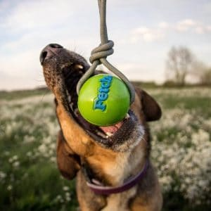 orbee tuff fetch ball by planet dog