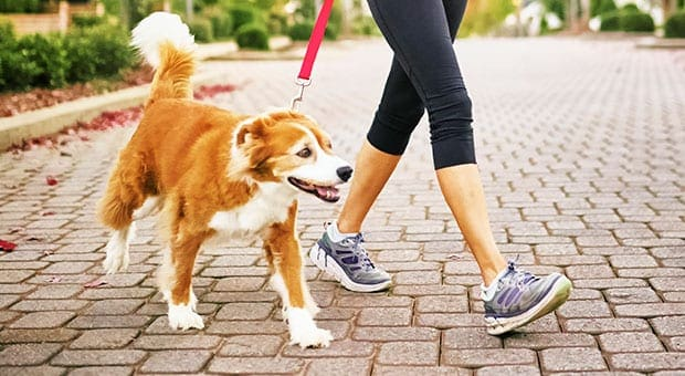 5 Reasons to Hire a Dog Walker