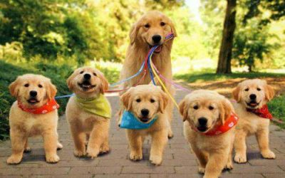 Things you want to know about a Professional Dog Walker