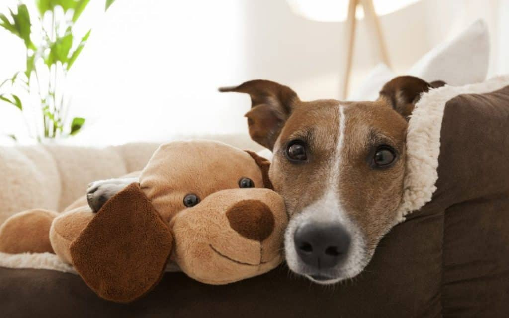 What does a Pet Crew Pet Sitter do?