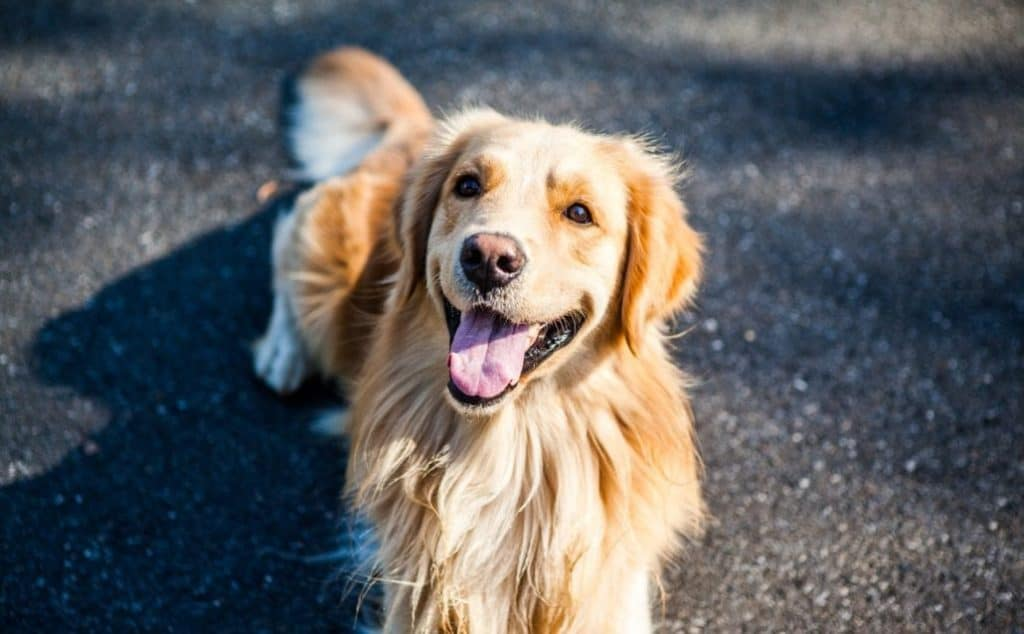Key Questions to Ask Your Pet Sitter